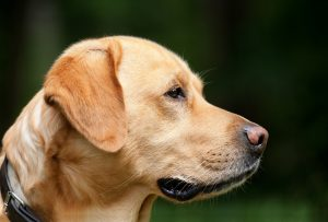 how to stop the barking dogs